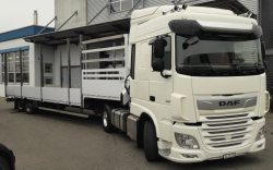 DAF new XF 480 FT SC